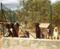 Tierschutz Finca Lobo