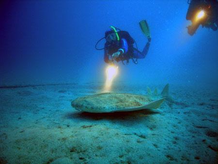 Taucher mit engelhai